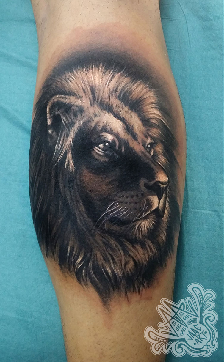 lion big