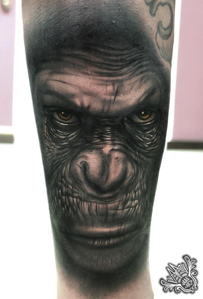 planetasimios-simios-apes-planetapes-mono-monkey